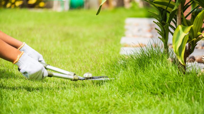 How to Have a Grassy Lawn Without Putting Any Effort?